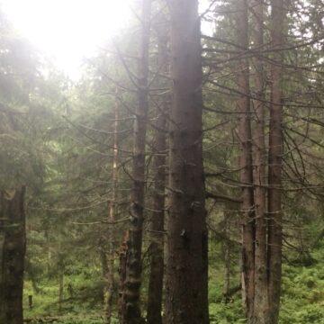 W zamkniętym lesie (letnie wspomnienie)